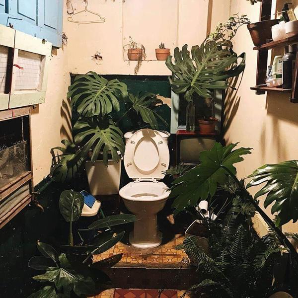 toilet-doc-1